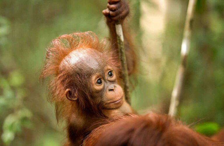 Чем заняться на Борнео туристу