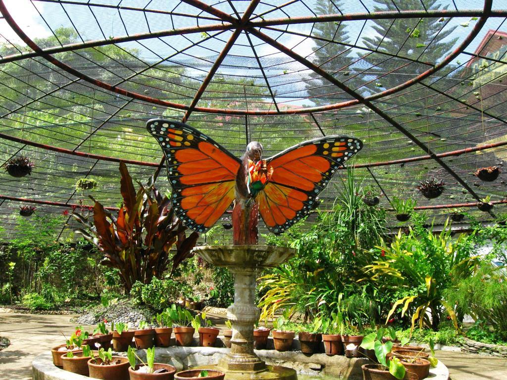 Что туристу делать на Сентозе - посещение парка бабочек