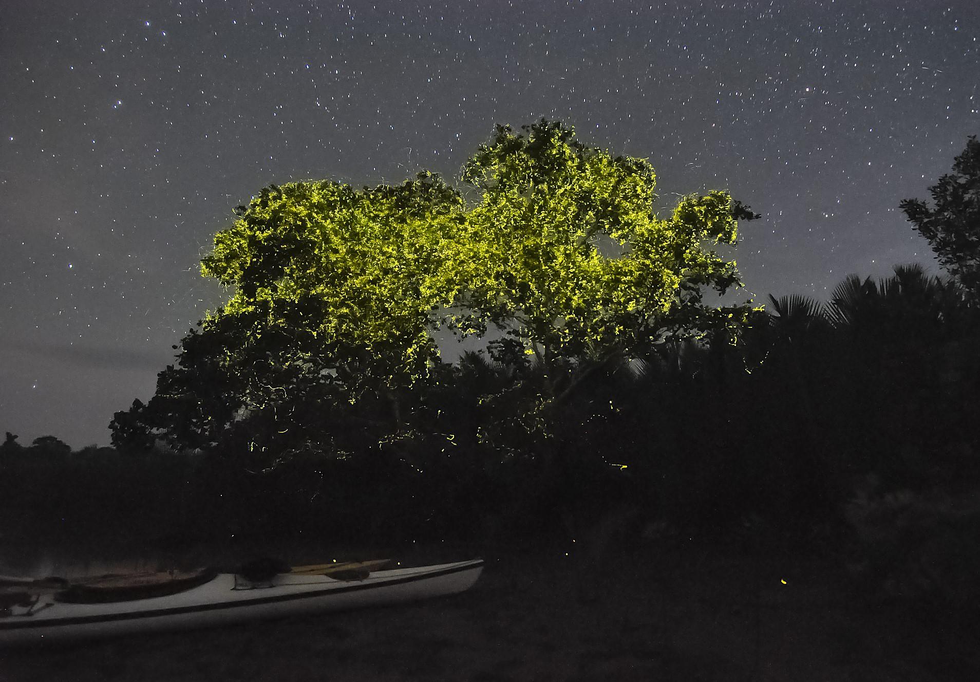 Экскурсия к светлячкам на острове Палаван