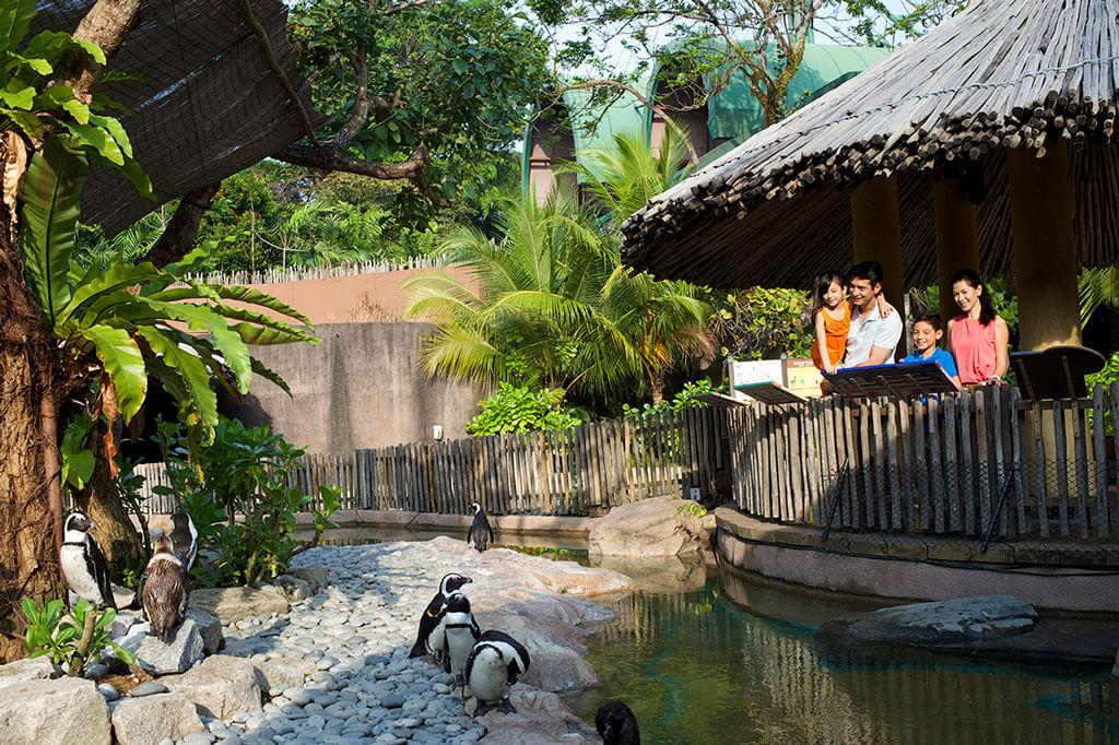 Пингвины в парке птиц Джуронг в Сингапуре