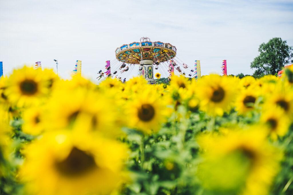 Парк подсолнухов в Гуанчжоу для всей семьи;  Sunflower Garden