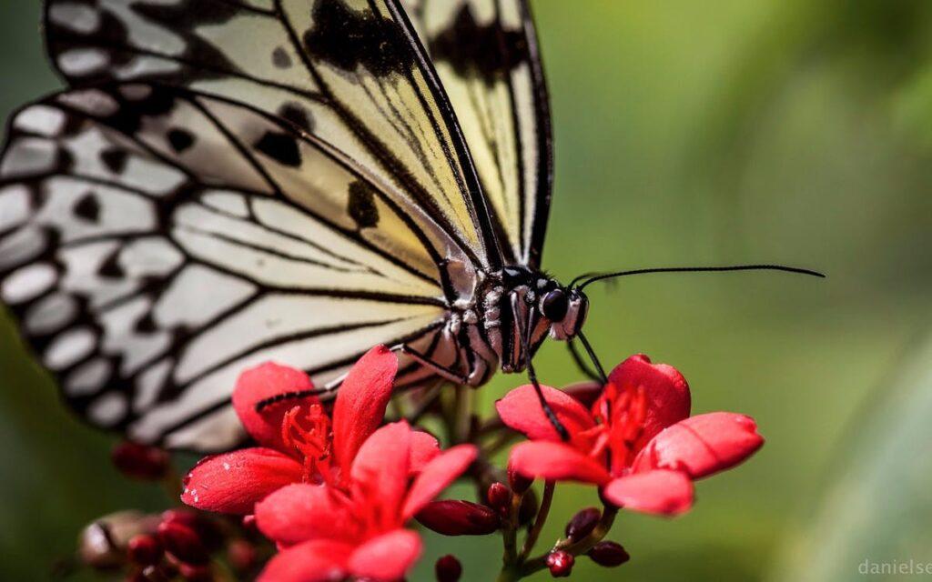 Парк бабочек в Сингапуре