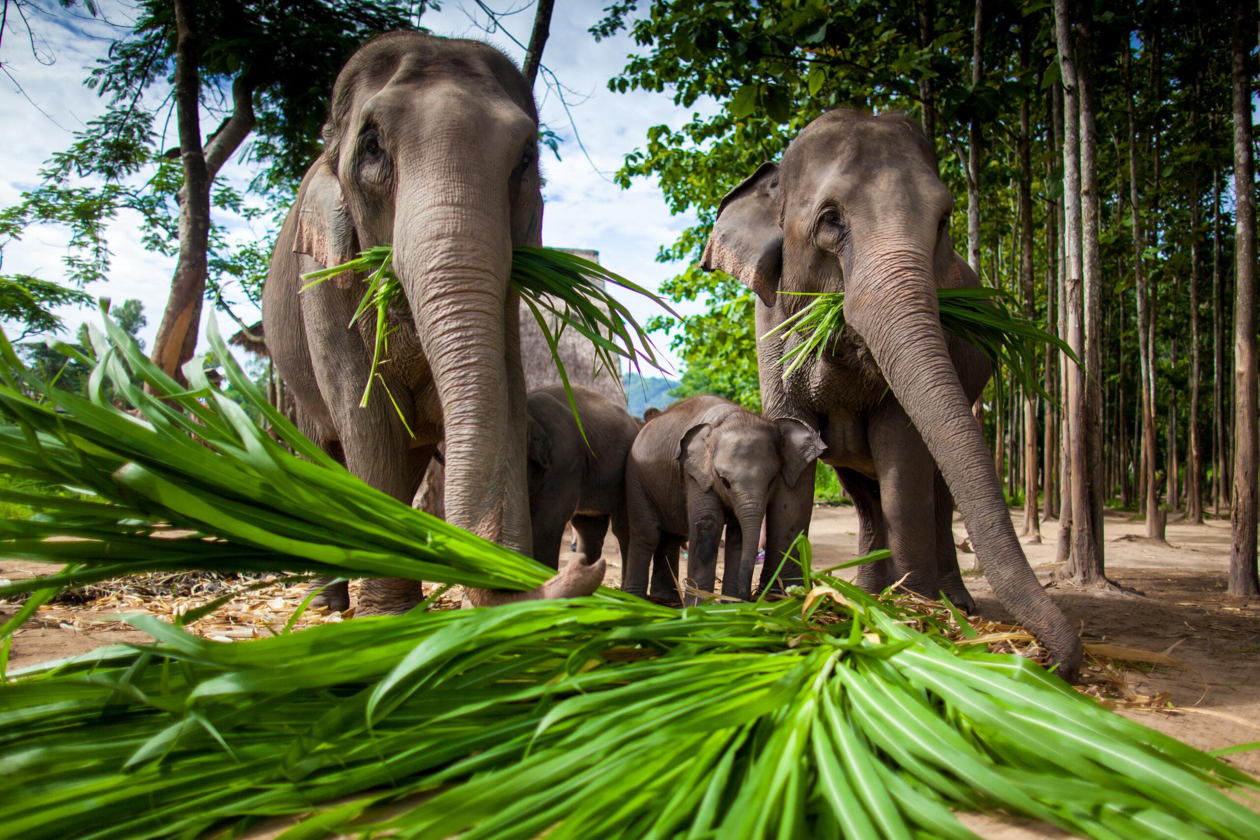 Лучшие парки острова Самуи