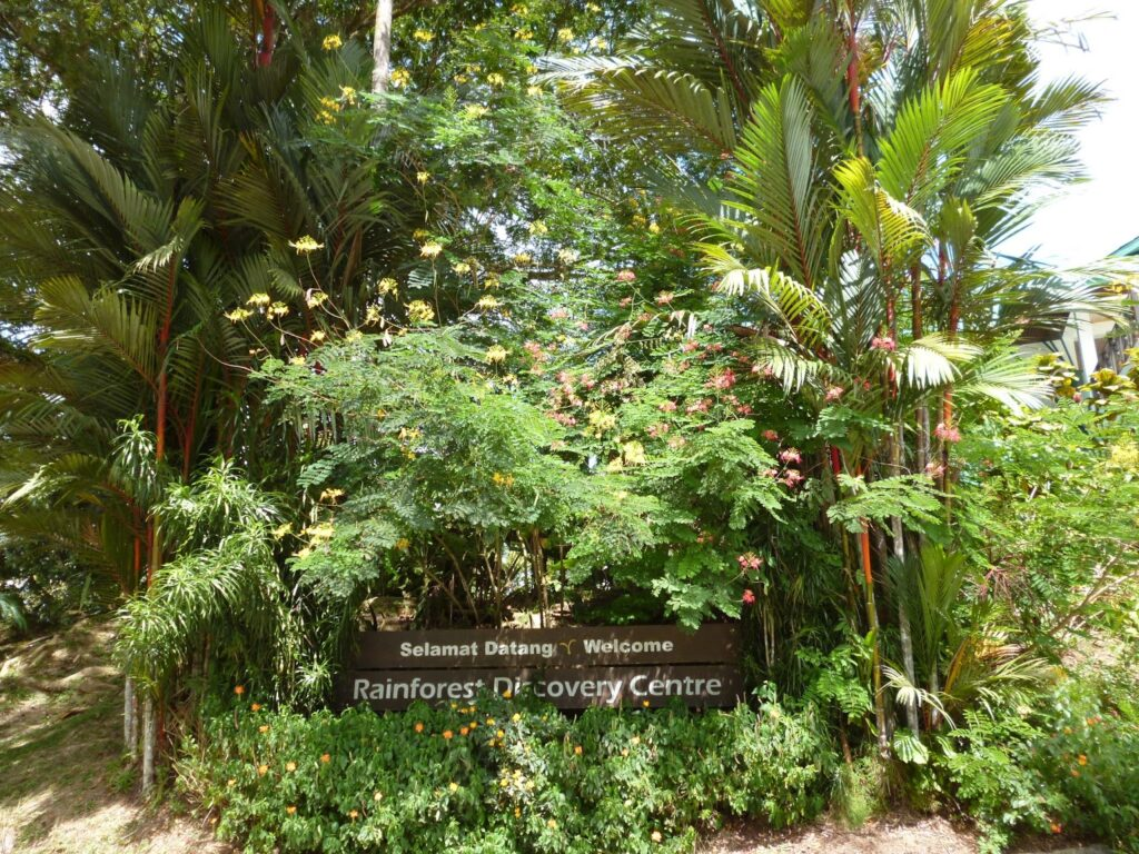 Тропический лес на острове Калимантан в Малайзии