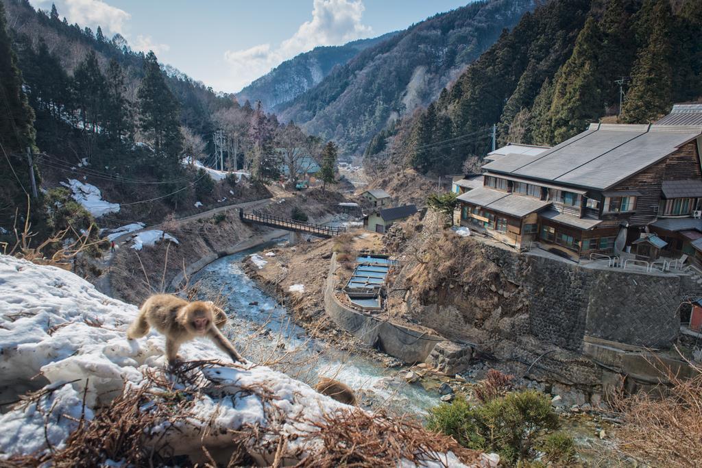 Территория парка снежных обезьян в Японии