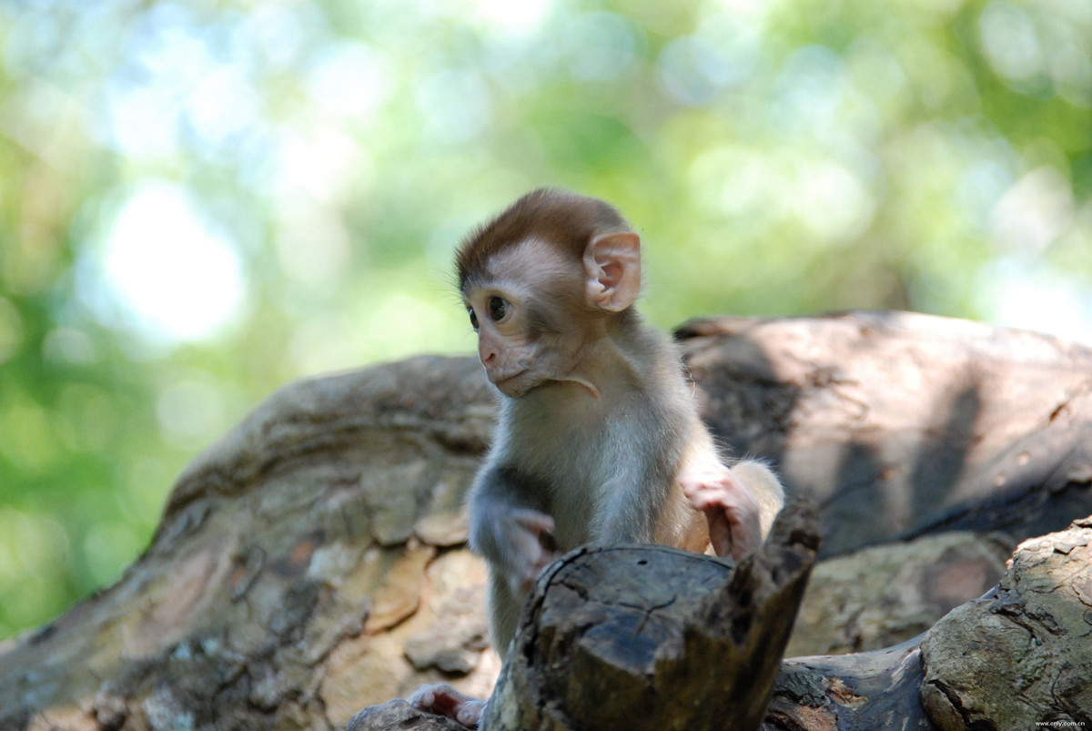 Остров обезьян Нанван в Китае