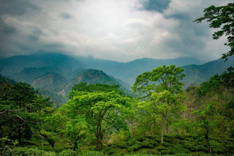 Парк Бако в Малайзии