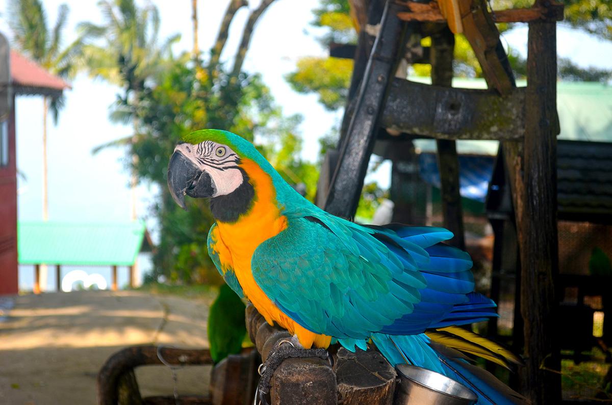 Paradise Park на острове Самуи - цены, как добраться
