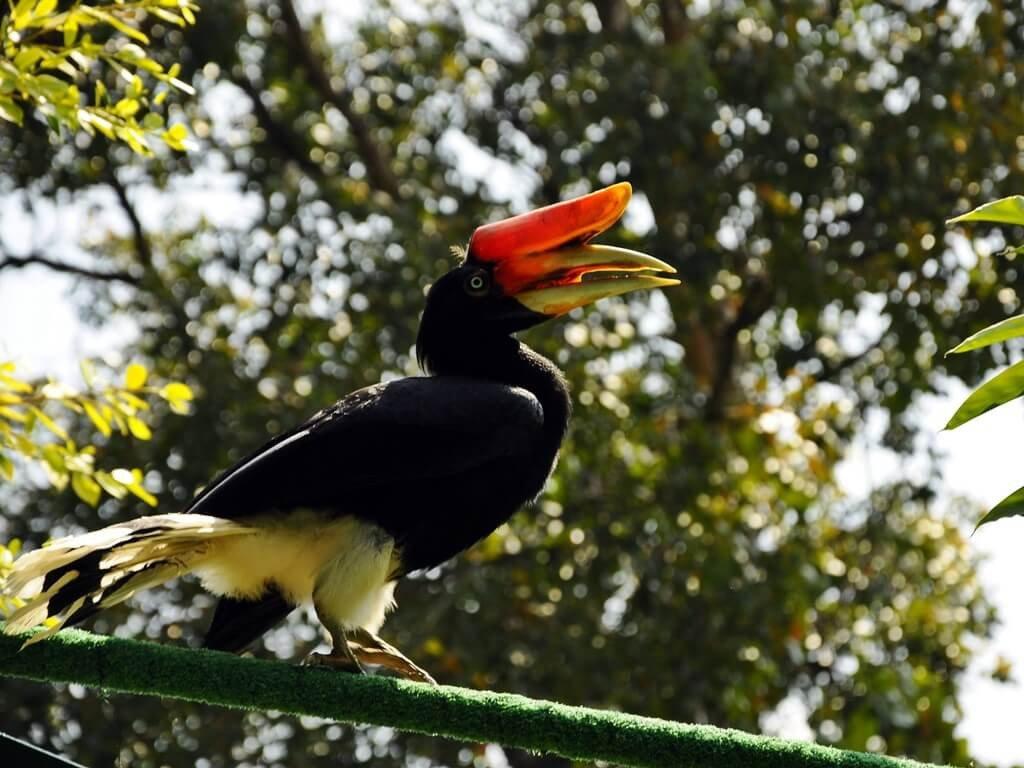 Птицы парка Бако