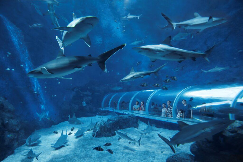 Что посмотреть туристу на Сентозе - океанариум