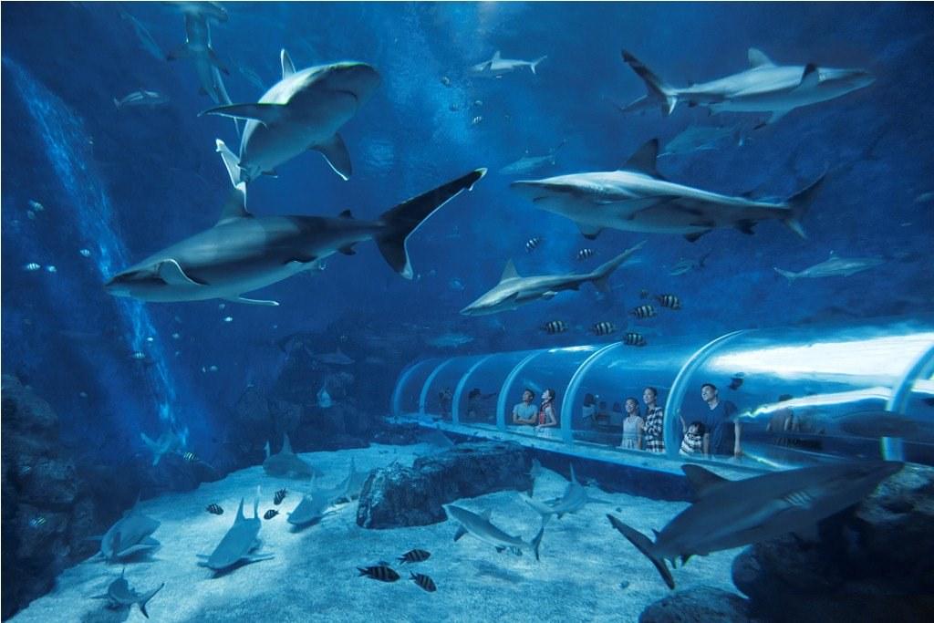 Океанариум Sea Aquarium  в Сингапуре