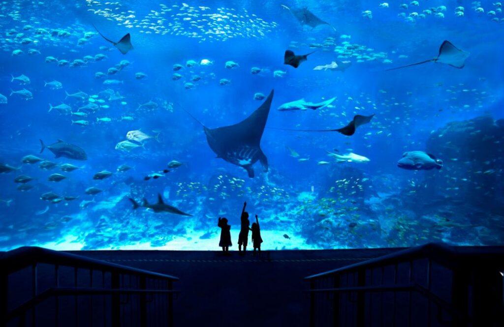 Океанариум  Sea Aquarium на острове Сентоса в Сингапуре