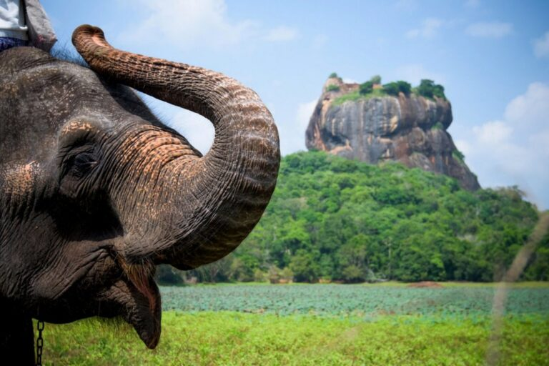 Особенности Шри-Ланки