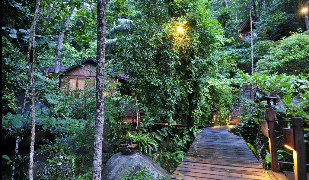 Джунглевые заросли на острове Тиоман в Малайзии