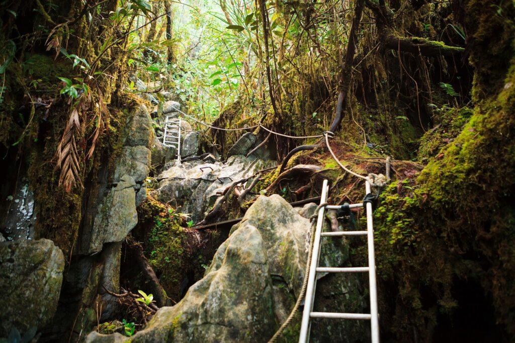 Треккинг в джунглях Борнео, Малайзия