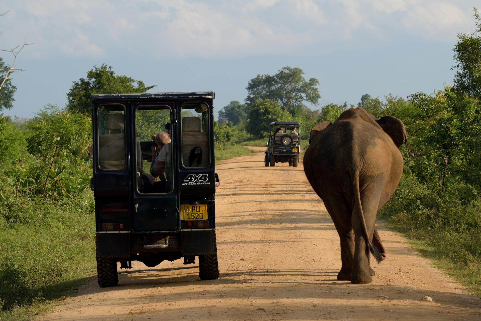 Национальный парк Удавалаве (Шри-Ланка)