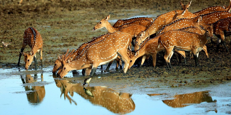 Национальный парк Яла (шри-Ланка)