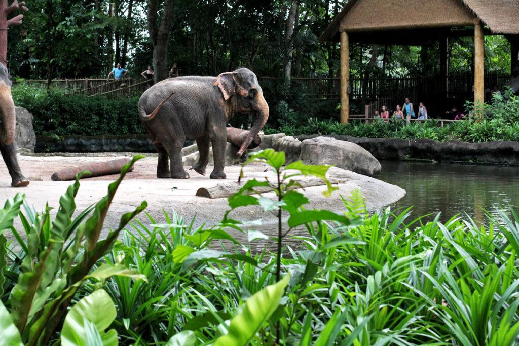 Зоопарк в Сингапуре для туристов