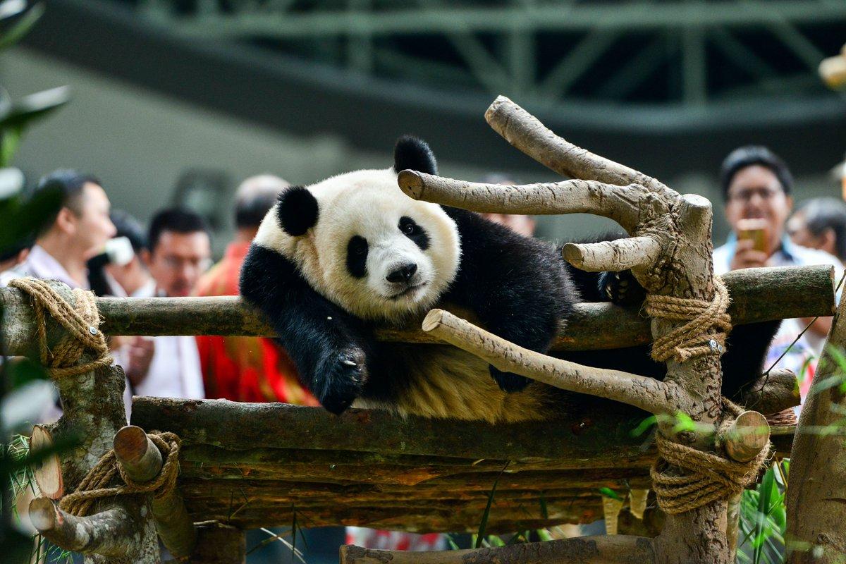 Зоопарк и океанариум в Куала-Лумпуре