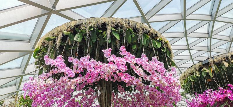 Сад орхидей, Сингапур, Чанги