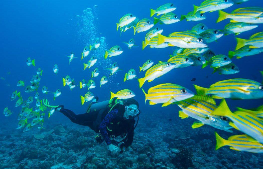 Дайвинг на Маврикии