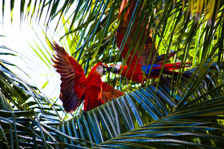 парки Маврикий