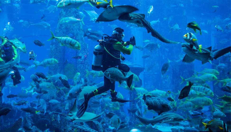 Океанариум в Пусане Sea Life